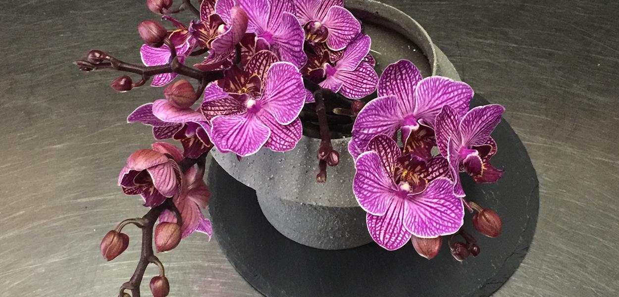 orchidee_viola_compo